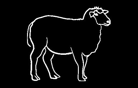 Ovčije sveže meso